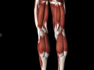 musculatura-rotura-fibrilar